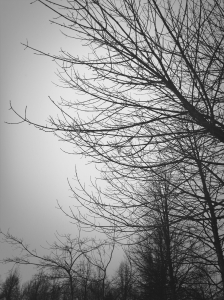 late winter tree